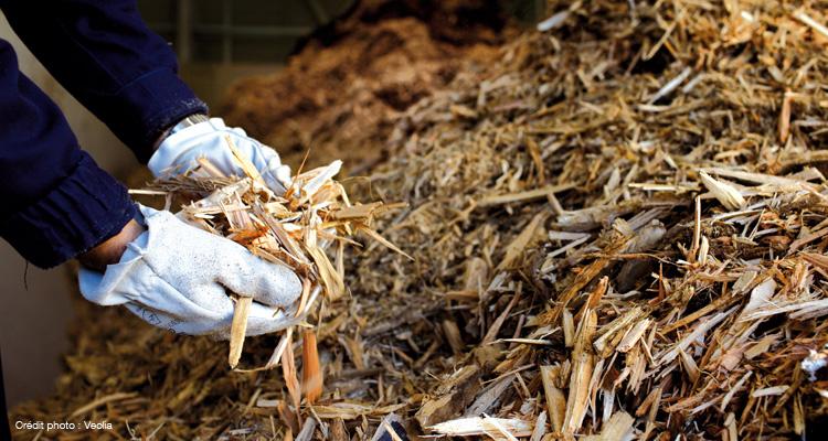 In merito alla proposta di un nuovo impianto a biomasse a Casole d'Elsa
